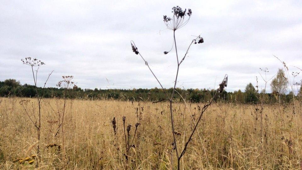штраф за заросший земельный участок