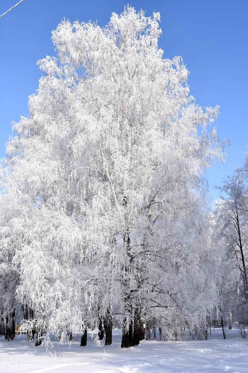 Зимнее Сасово
