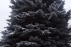 елка 3