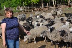 Овцеводство 1