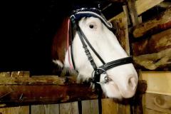 кони12