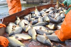 рыбхоз пара1