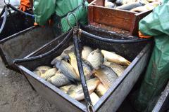 рыбхоз пара3