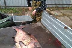 Рыба (4)