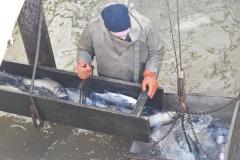 otgruzka-ryby-3