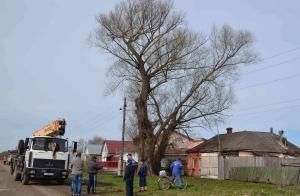 дерево в сапожке1