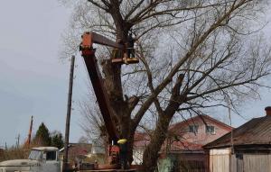 дерево в сапожке5
