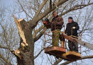 дерево в сапожке6