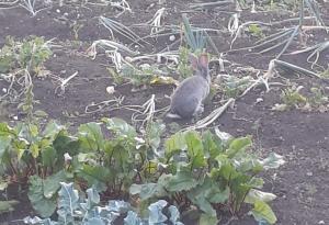 кролик (4)