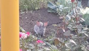 кролик (5)