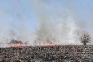 пожары в сасове5