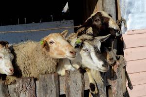 юлианна козы