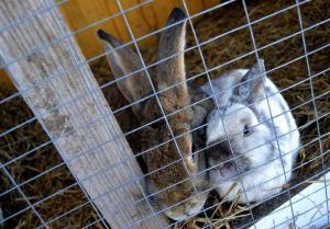 юлианна кролики