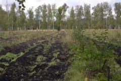YAblonevye-sady-2